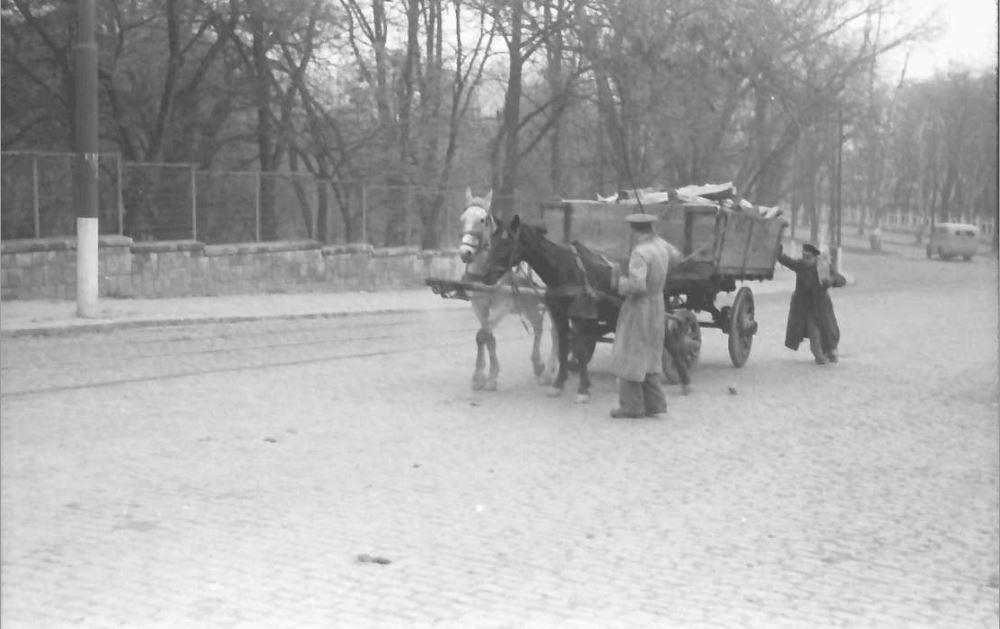 willy pragher - gradina botanica cotroceni noiembrie 1941 - 2