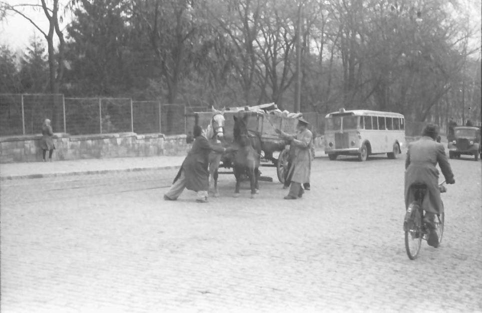 willy pragher - gradina botanica cotroceni noiembrie 1941 - 3